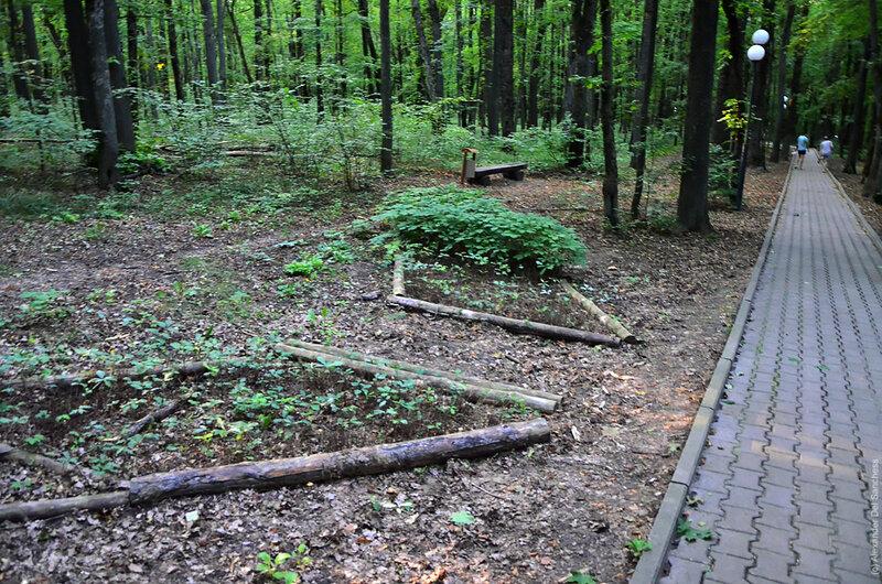 Монастырский лес, Белгород, фото Sanchess