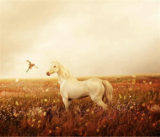 Collection of Stunning Horse Manipulations