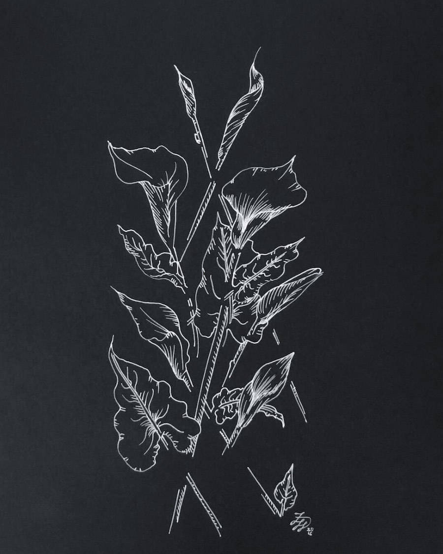Delicate Drawing Compositions with Flowers