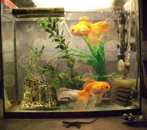 Рыбки1