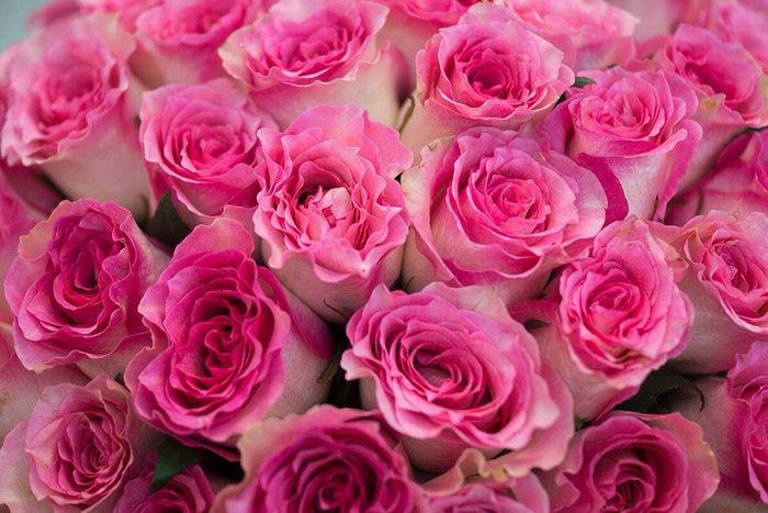 украинские розы