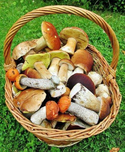 Богатый урожай грибов