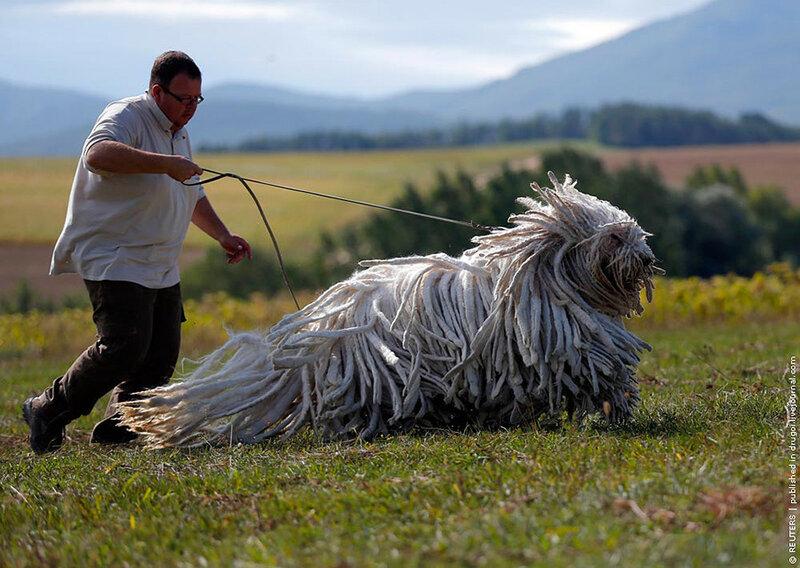 HUNGARY-DOGS/
