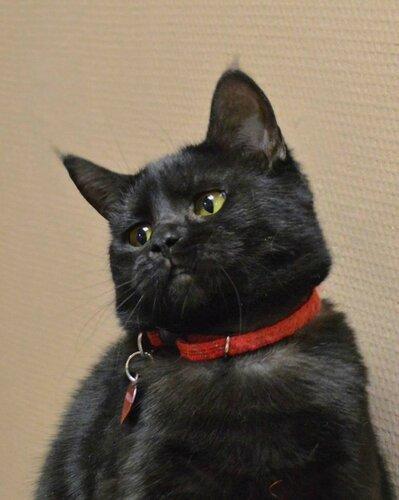 Яся кошка из приюта догпорта