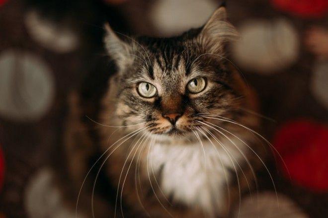 Для того, чтобы принести пользу хозяину, кошка должна безоговорочно хорошо чувствовать себя дома. Та