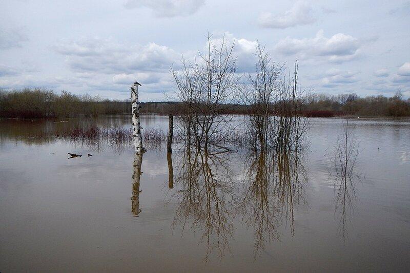 Скелеты берёз и затопленные водой кусты в оз. Бобровое