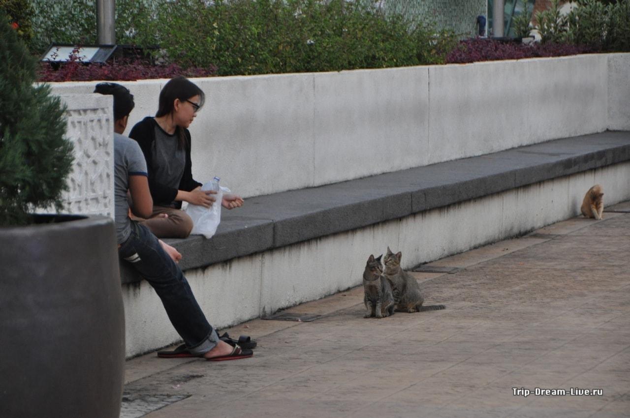 Парочка котеек выпрашивает еду