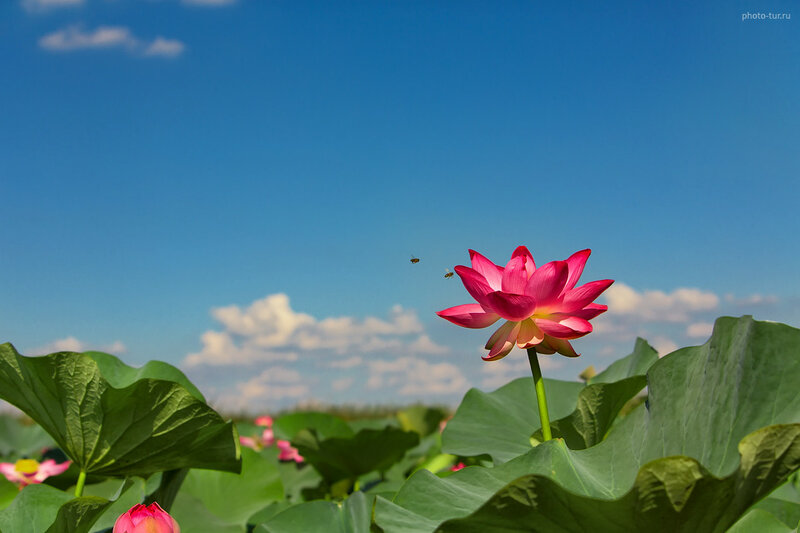 Фототуры, www.photo-tur.ru tel.: +7 (903)737-57-80