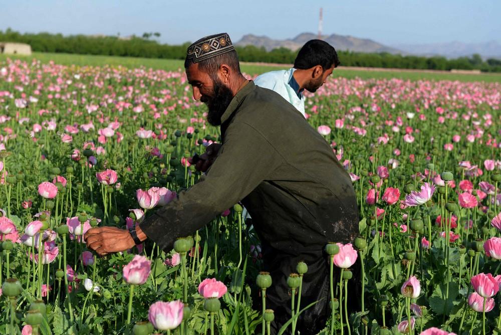 TOPSHOT-AFGHANISTAN-DRUGS-CRIME-OPIUM