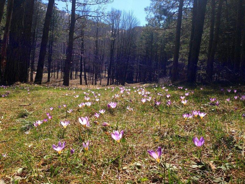 Черногоия весной, гора Ловчен