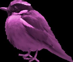 птички фиолетовые
