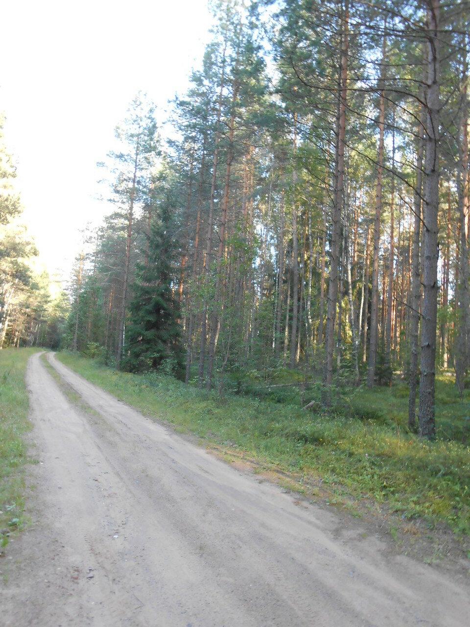 Дорога в районе Игнач-Креста