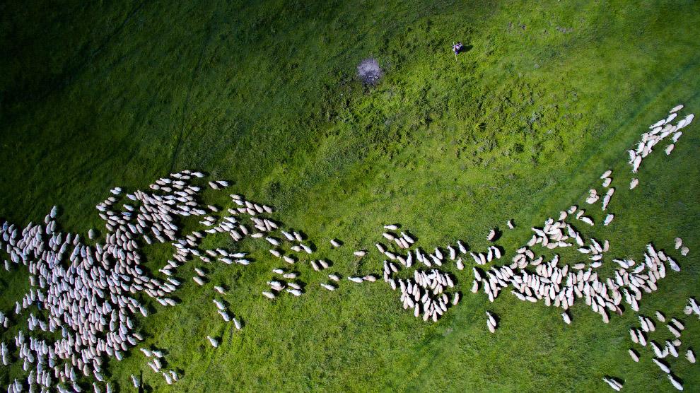 9. Лес в Дании. 1 место в категория «Природа». (Фото Mbernholdt):