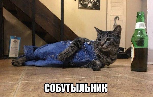 Если вы еще не знаете как использовать кота, вот вам несколько вариантов