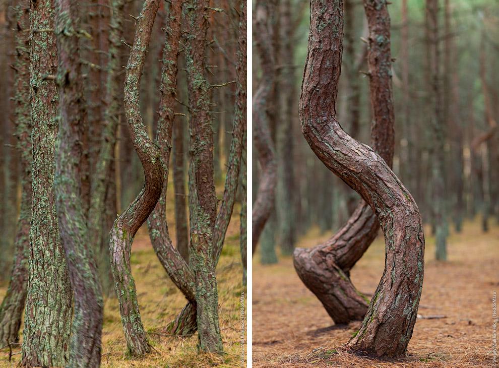 И чем глубже вы заходите в лес, тем сильнее проявляется это странное свойство: