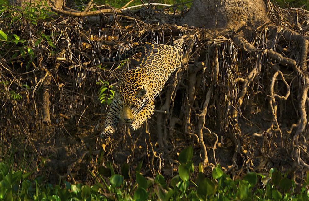 Потрясающие кадры дикой природы