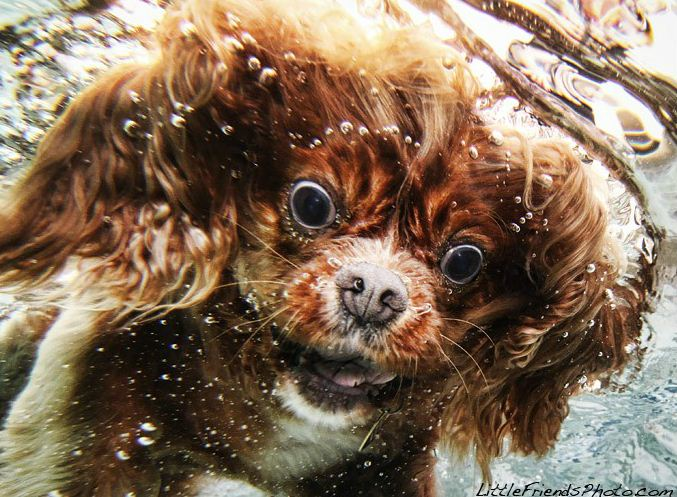 Подводные снимки собак от Сета Кастила (Seth Casteel)