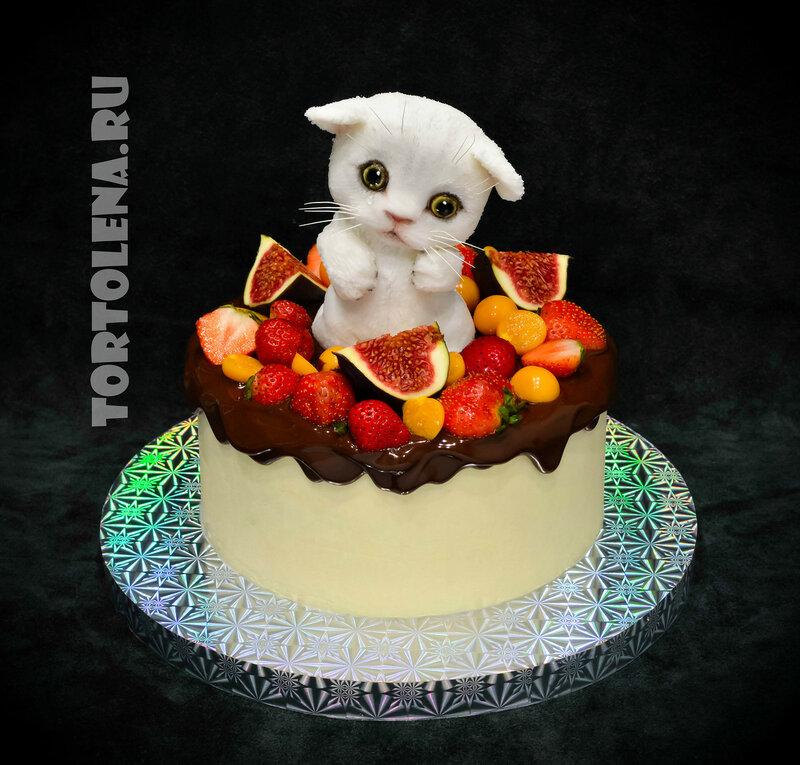 котёнок ягоды----DSC_1077-2-2.jpg