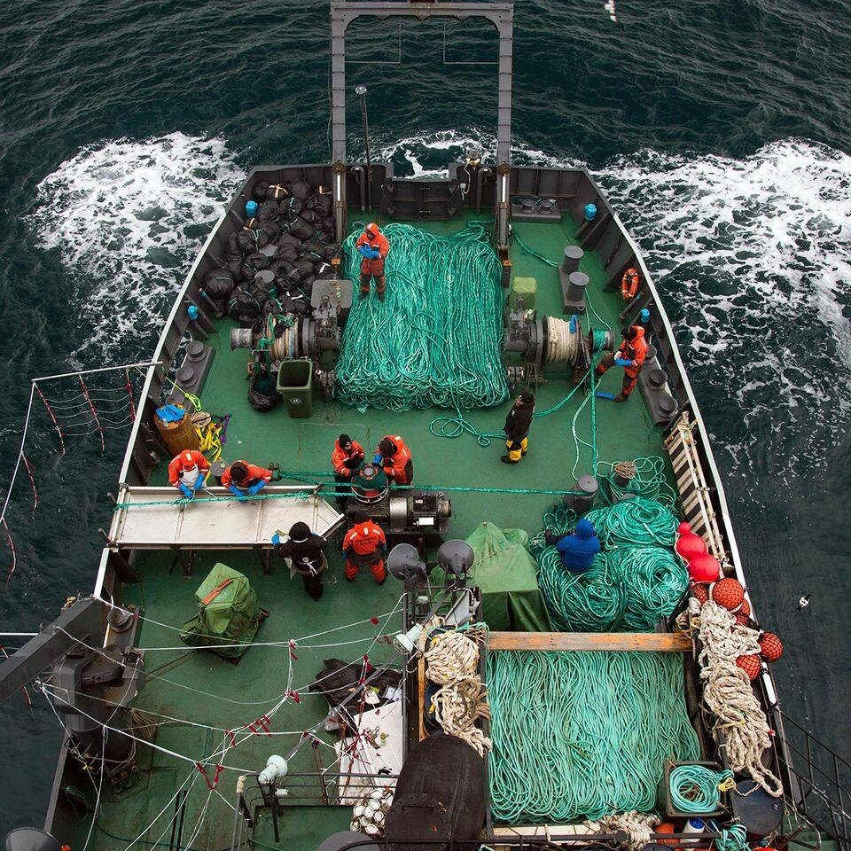 photo credit: Giacomo Giorigi / Sea Shepherd Global