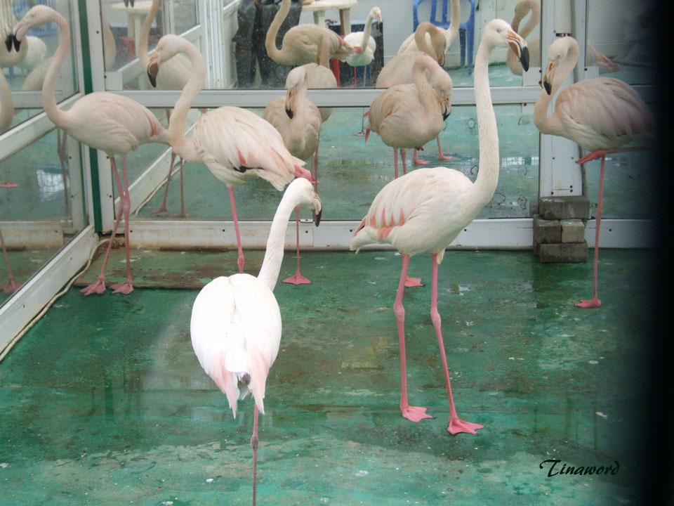 фламинго-0.jpg