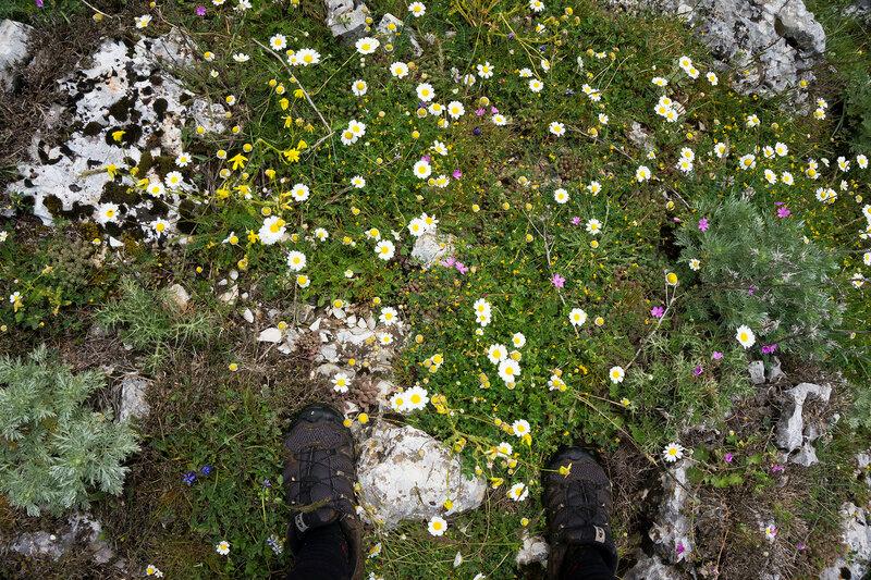 цветы в мае на горе Митсикели (Mitsikeli), Загория, Греция