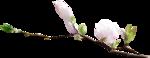 NatashaNaStDesigns_WiterFairytale_branchwithflowers2.png