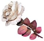 flower14-(lthdsgn).png