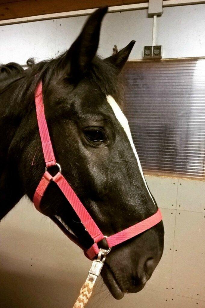 Мудрый конь