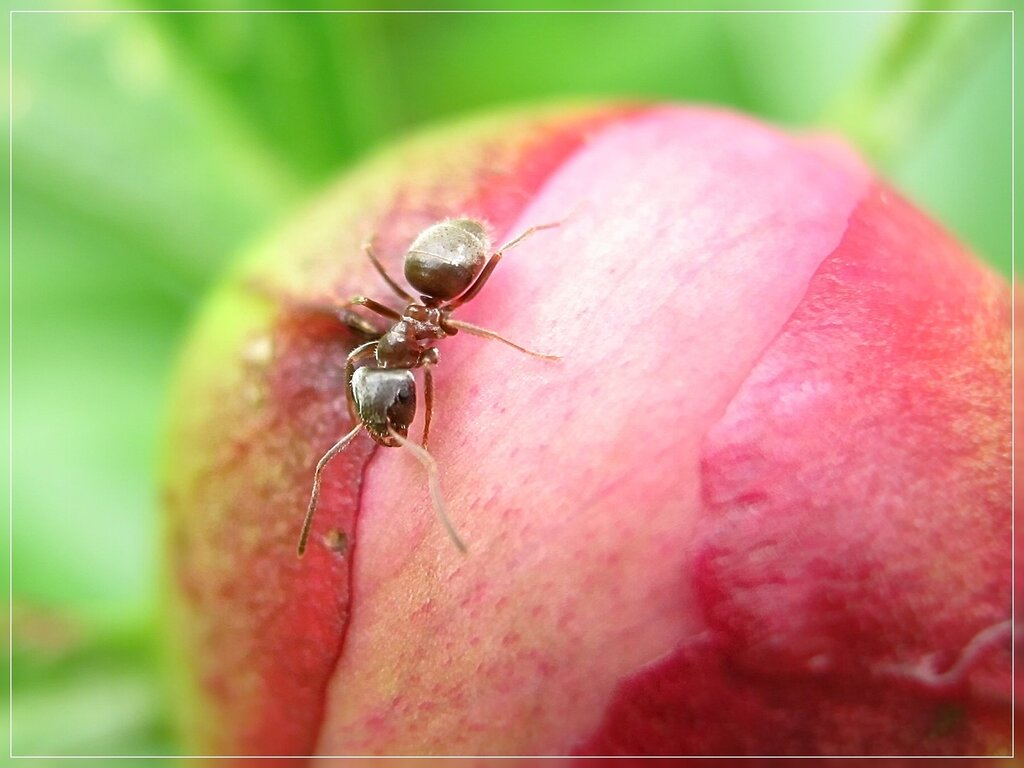 Небольшая фотосессия с муравьями