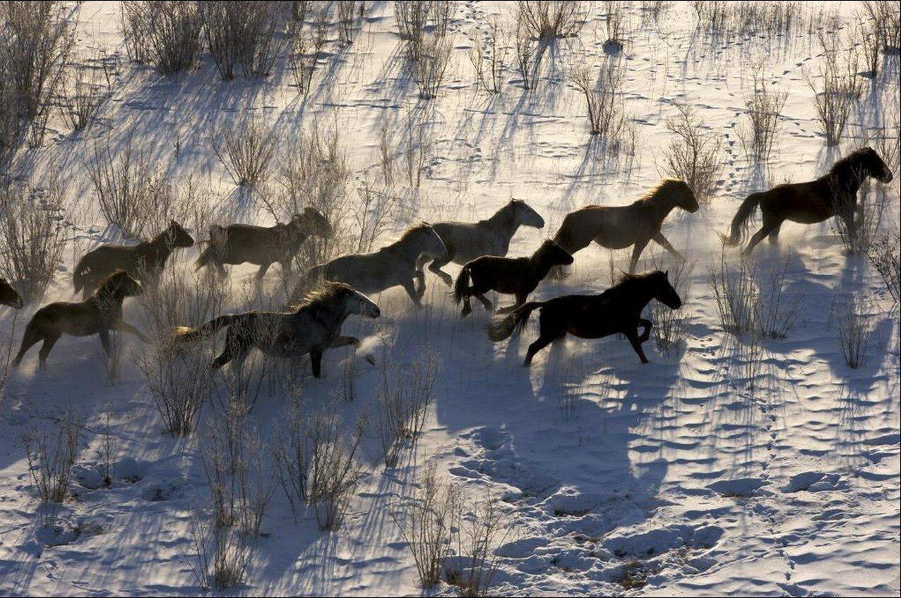 24. Бурятские лошади в дикой природе на берегу озера Байкал