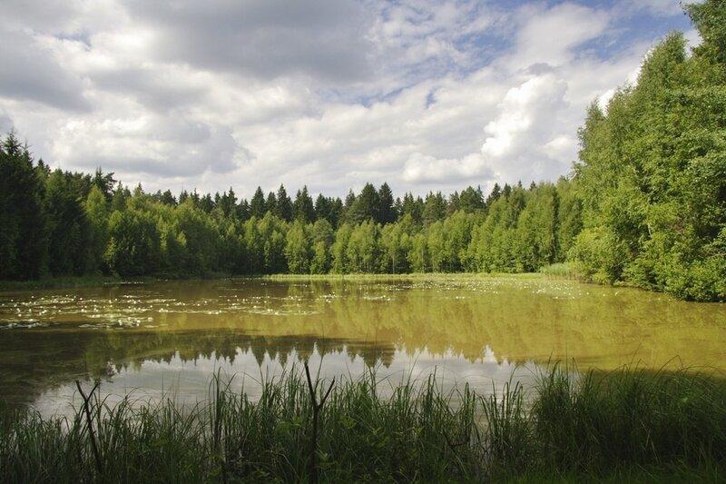 Озеро лесное