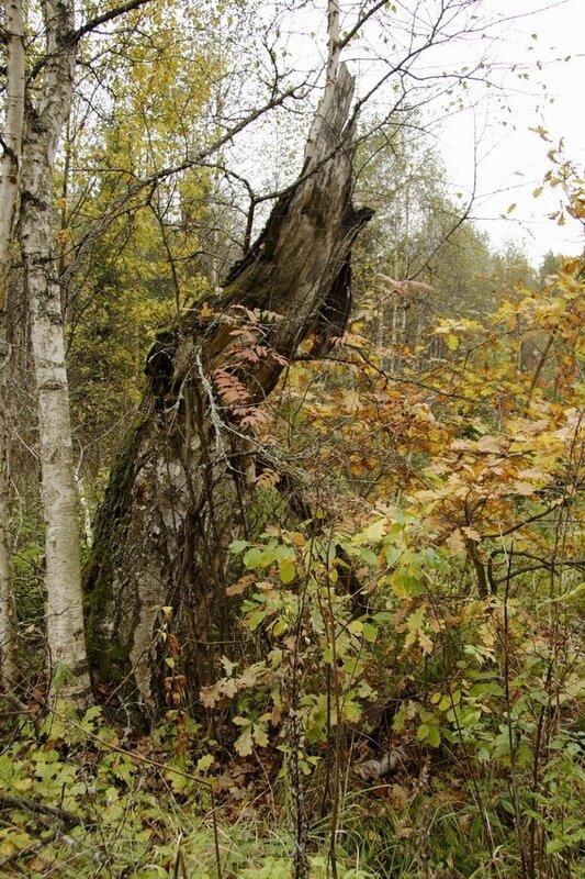 Октябрь в Подмосковье. Обломок дерева