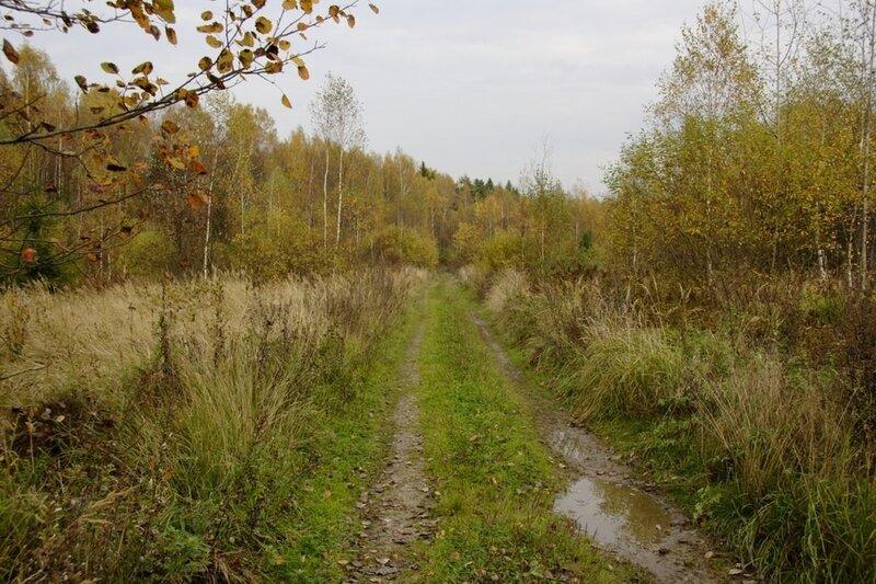 Октябрь в Подмосковье. Лесная дорога