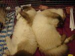 Магвай и Диана - брат и сестра