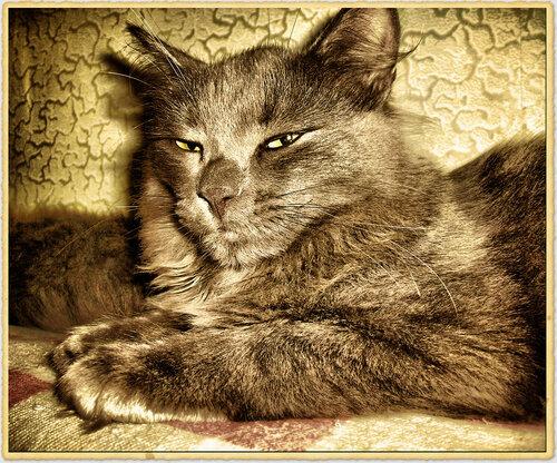 GAGAS12007 — «Кот Квадратик» на Яндекс.Фотках