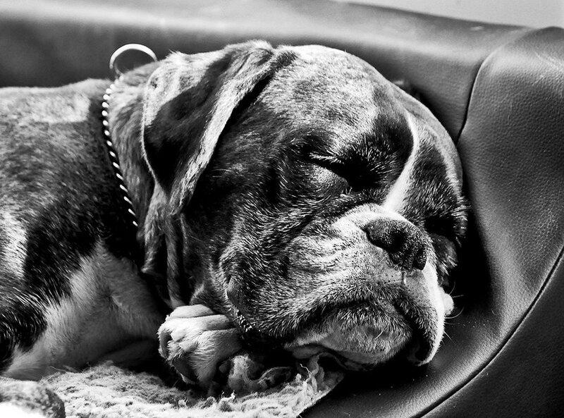 Фотограф Bakkers Hundekonsult