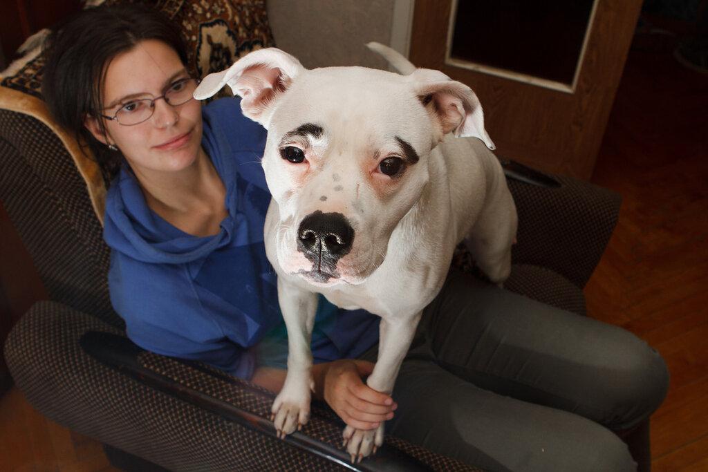 Отравленная догхантерами собака