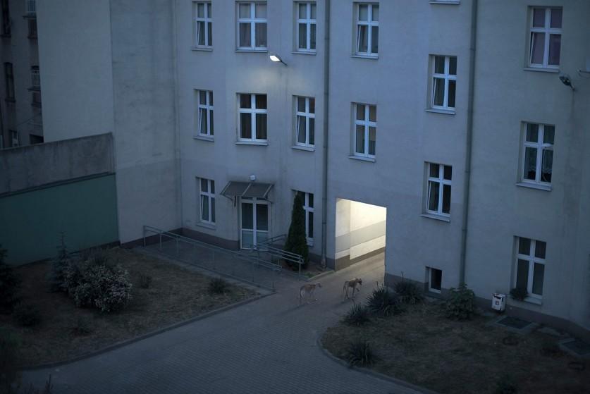 Эмоциональная тишина в работах Вероники Издебской (Weronika Izdebska) (10 фото)