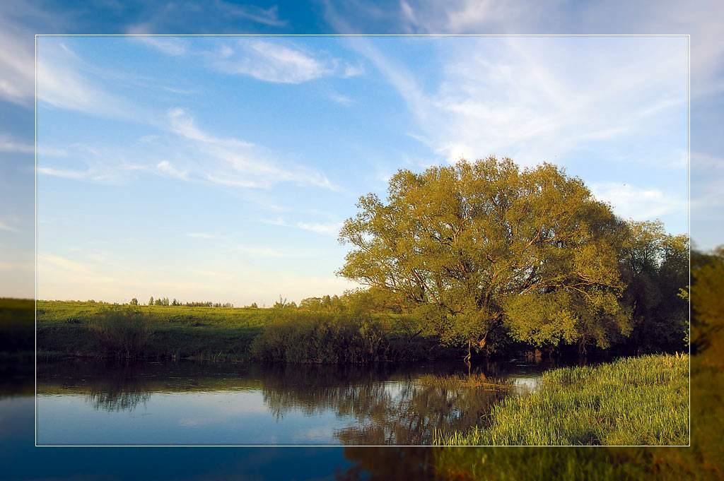 Река Проня