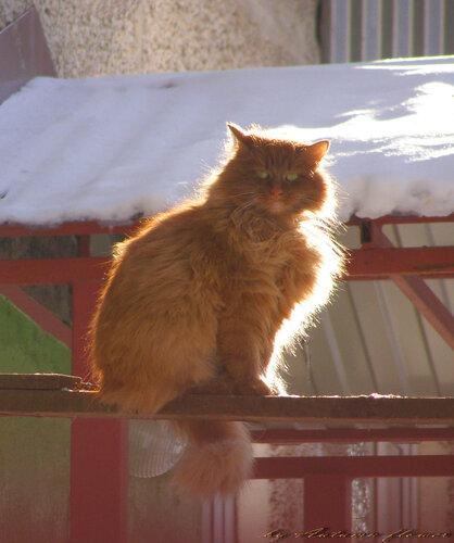 Светящийся кот