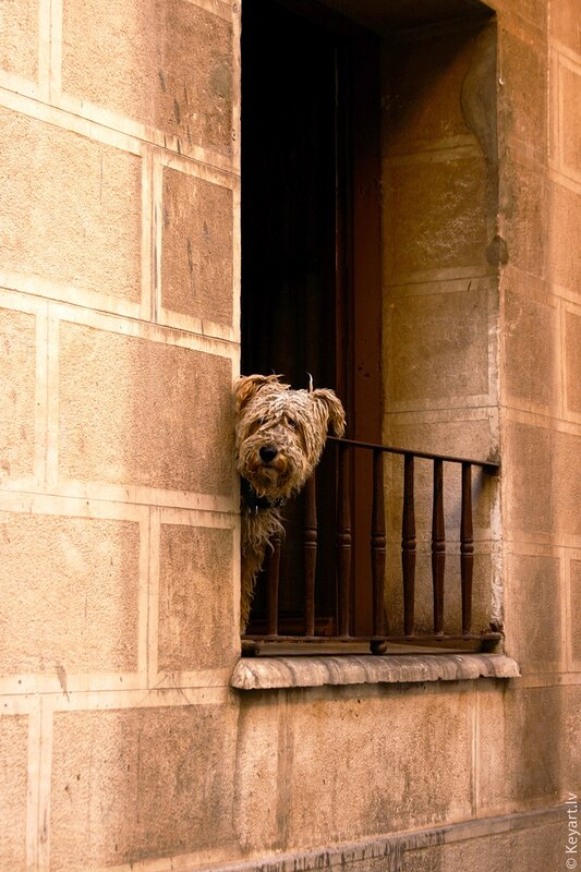 One dog on the balcony in Zaragoza