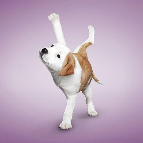 Дэн Боррис: Коты и собаки йоги
