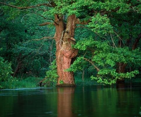 На реке Нерусса - Заповедник Брянский лес