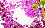 Purple rose and card