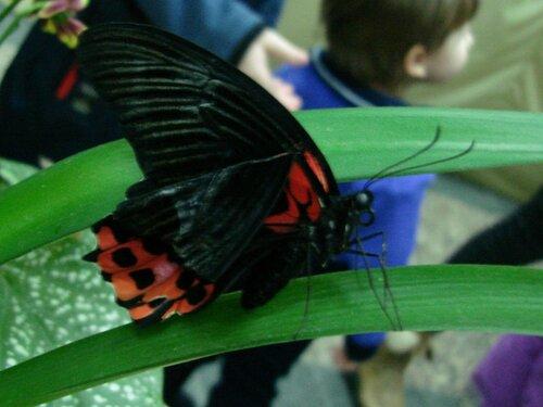 На выставке тропических бабочек.