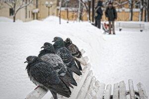 4×2 (голубь, зима, пара, птица, снег, человек)