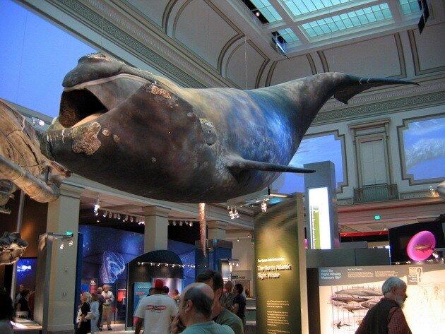 Национальный музей естественной истории. Вашингтон