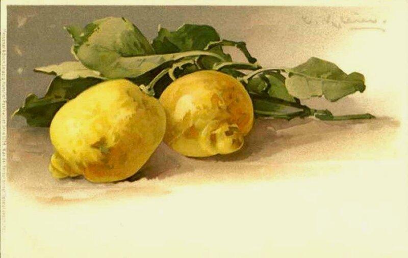 К. Кляйн.  Лимоны.