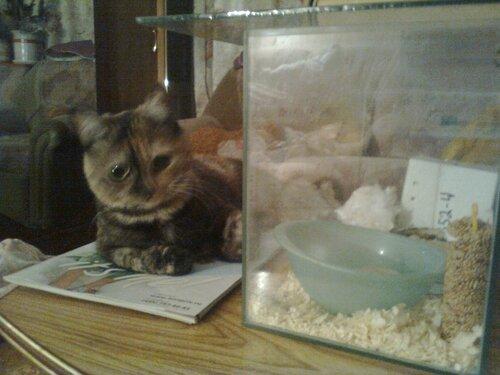 Майя ждёт мышку