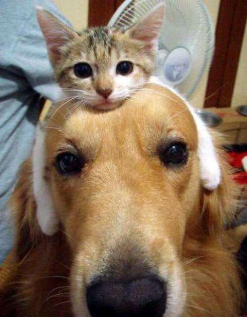 жить как кошка с собакой